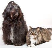 Katze und Hund Stockbilder