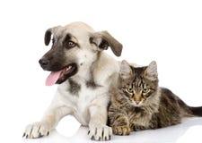 Katze und Hund. lizenzfreie stockbilder