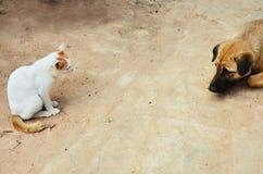 Katze und Hund Lizenzfreie Stockfotografie