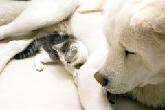 Katze und Hund stockfotos