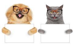 Katze und Hund in den Gläsern halten Tatzenweißfahne Stockbilder