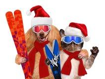 Katze und Hund in den roten Weihnachtshüten mit Skis Lizenzfreie Stockbilder