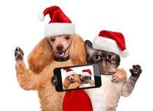 Katze und Hund in den roten Weihnachtshüten Stockfotografie