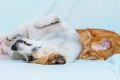 Katze und Hund, die auf dem Sofa schlafen stockbild