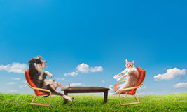Katze und Hund, die sich entspannen Lizenzfreie Stockfotos