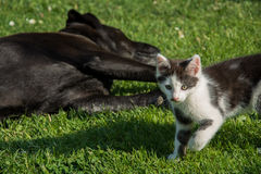 Katze und Hund, die sich entspannen Stockbilder