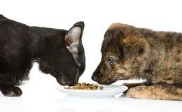 Katze und Hund, die zusammen essen Stockbilder