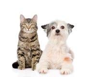 Katze und Hund, die zusammen Kamera betrachten Lokalisiert auf Weiß stockbild