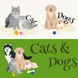 Katze und Hund, die zusammen liegen Lizenzfreies Stockbild