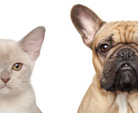 Katze und Hund, Hälfte des Mündungsnahaufnahmeporträts Lizenzfreie Stockfotos