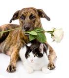 Katze und Hund mit einer weißen Rose Getrennt auf weißem Hintergrund Lizenzfreies Stockbild