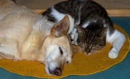 Katze und Hund schlafen zusammen auf dem Boden Lizenzfreie Stockbilder