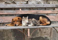 Katze und Hund stehen still Stockfotos