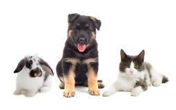 Katze und Hund und Kaninchen Stockbild