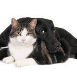 Katze und Hund, unwahrscheinliche Begleiter Stockbilder