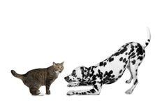 Katze und Hund werden spielen Stockfotografie