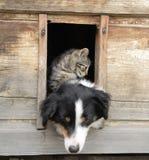 Katze und Hund zu Hause Stockbilder