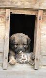 Katze und Hund zu Hause Stockfotografie