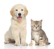 Katze und Hund zusammen Lizenzfreie Stockfotografie