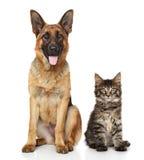 Katze und Hund zusammen Stockfoto