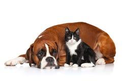 Katze und Hund zusammen Stockbild