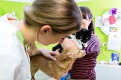 Katze und Hund zusammen am Tierarzt- oder Haustierfriseur Stockfotografie
