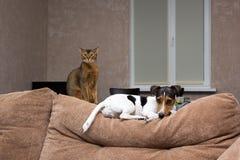 Katze und Hund zusammen ziehen an sich von der Couch zurück Stockbild