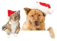 Katze- und Hundefahne für die Feiertage Lizenzfreies Stockbild