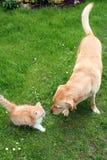 Katze- und Hundespielen Stockfotos