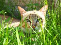Katze und Inneres lizenzfreie stockfotografie