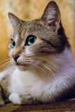 Katze und Inneres Stockfoto