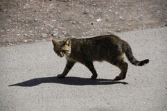 Katze und Inneres Stockfotos