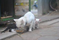 Katze und Kätzchen Stockfotografie