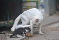 Katze und Kätzchen Lizenzfreie Stockfotos