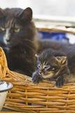 Katze und Kätzchen Stockfotos
