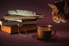 Katze und Kaffee Lizenzfreie Stockfotos