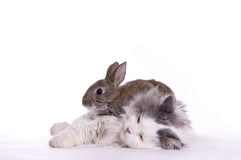 Katze und Kaninchen Stockbild