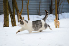 Katze und Kitten Running im Schnee Stockbilder
