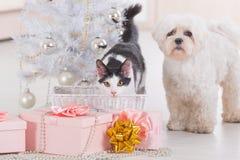 Katze und kleiner Hund, die zusammen nahe Weihnachtsbaum sitzen Lizenzfreie Stockfotos