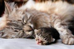 Katze- und Kätzchenumarmung Stockfotografie
