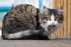 Katze und Maus Lizenzfreie Stockfotos