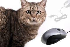 Katze und Maus Lizenzfreies Stockbild
