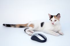 Katze und Maus Stockbilder