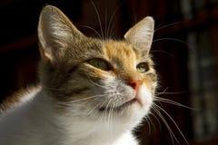 Katze und Morgensonne Stockfoto