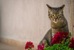 Katze und Pelargonie Lizenzfreies Stockfoto