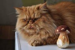 Katze und Pilz Stockfotos