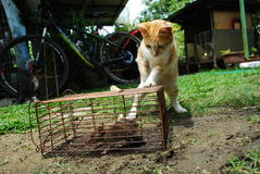 Katze und Ratte Stockbild