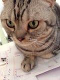 Katze und Rechnungen Stockfotos