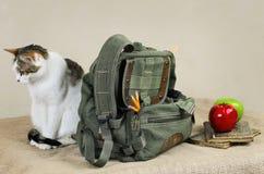 Katze und Rucksack Stockbild