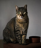 Katze und Schüssel Stockfoto